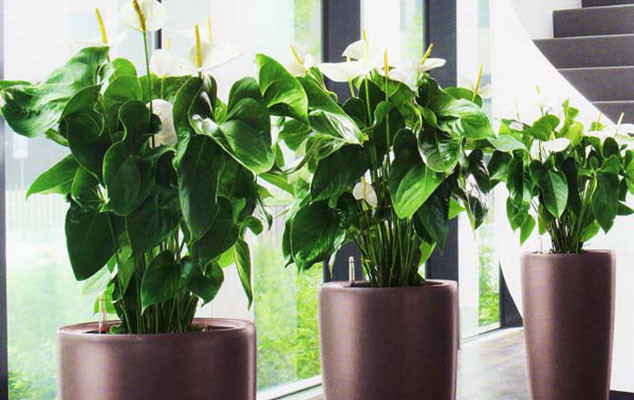 Denver Plant Service Start Beautifying Your Office Today